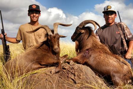 Nahele Outfitters: Spanish goats/Hawaiian ibex
