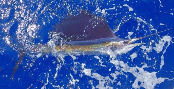 Top Gun Fishing Charters: Swordfishing Trip