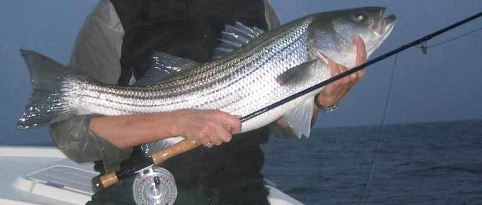 Captain Matthew Miller: Fishing Trips