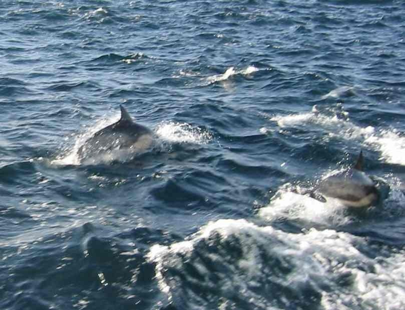 Riptide Charters: Whale Watching