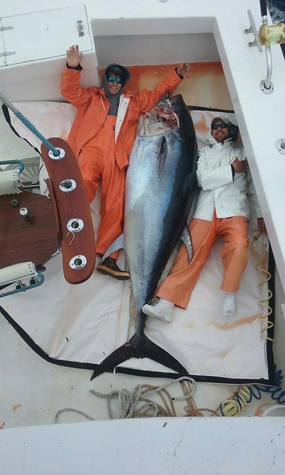 Predator Sport Fishing : Giant Blue Fin Tuna