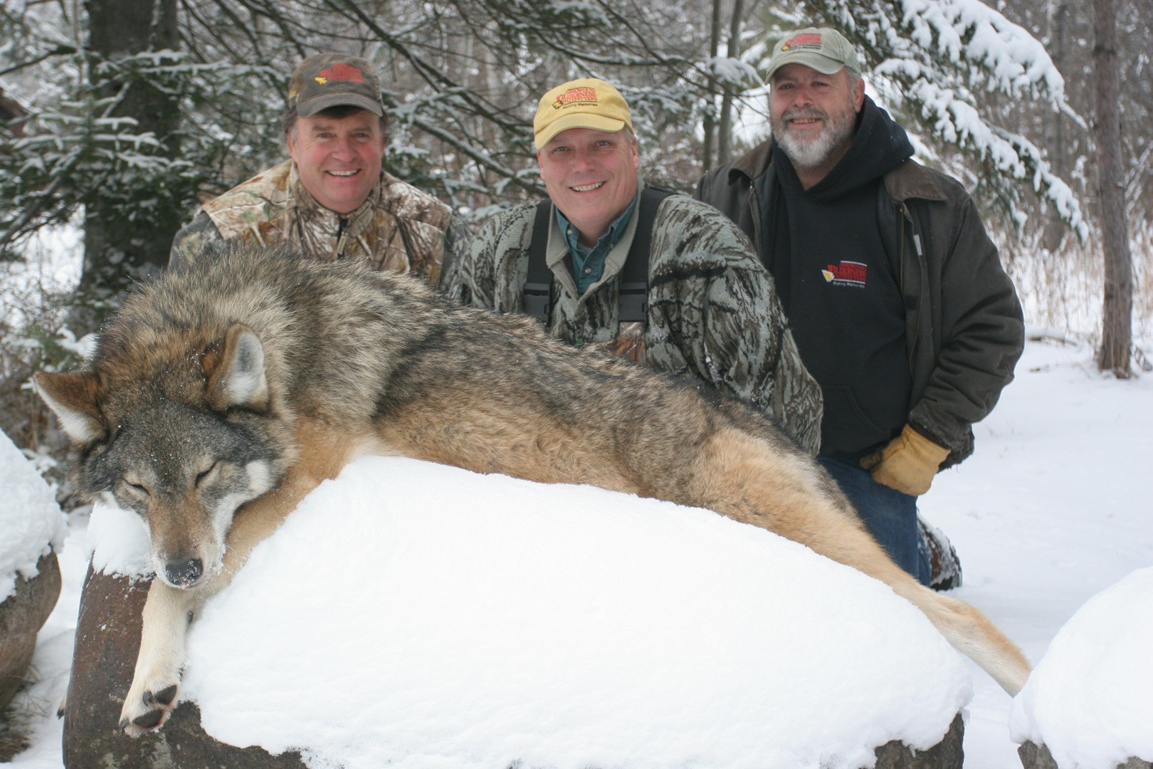 Arrowhead Wilderness Outfitters: Timber Wolf Hunt Minnesota
