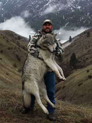Deadwood Lodge Outfitters: Idaho Wolf Hunts
