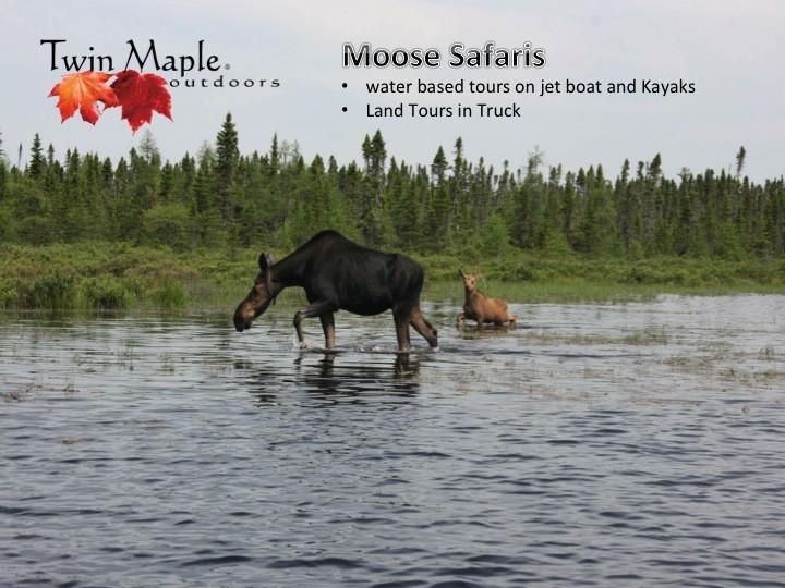 Twin Maple Outdoors: Maine Moose Safaris