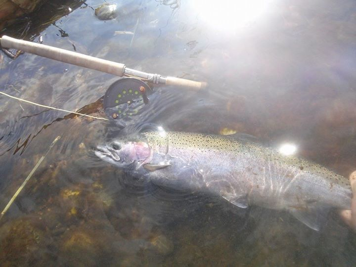 Nor Cal Fly Guides: Half Day 4hr Spey/Switch Guided Trip