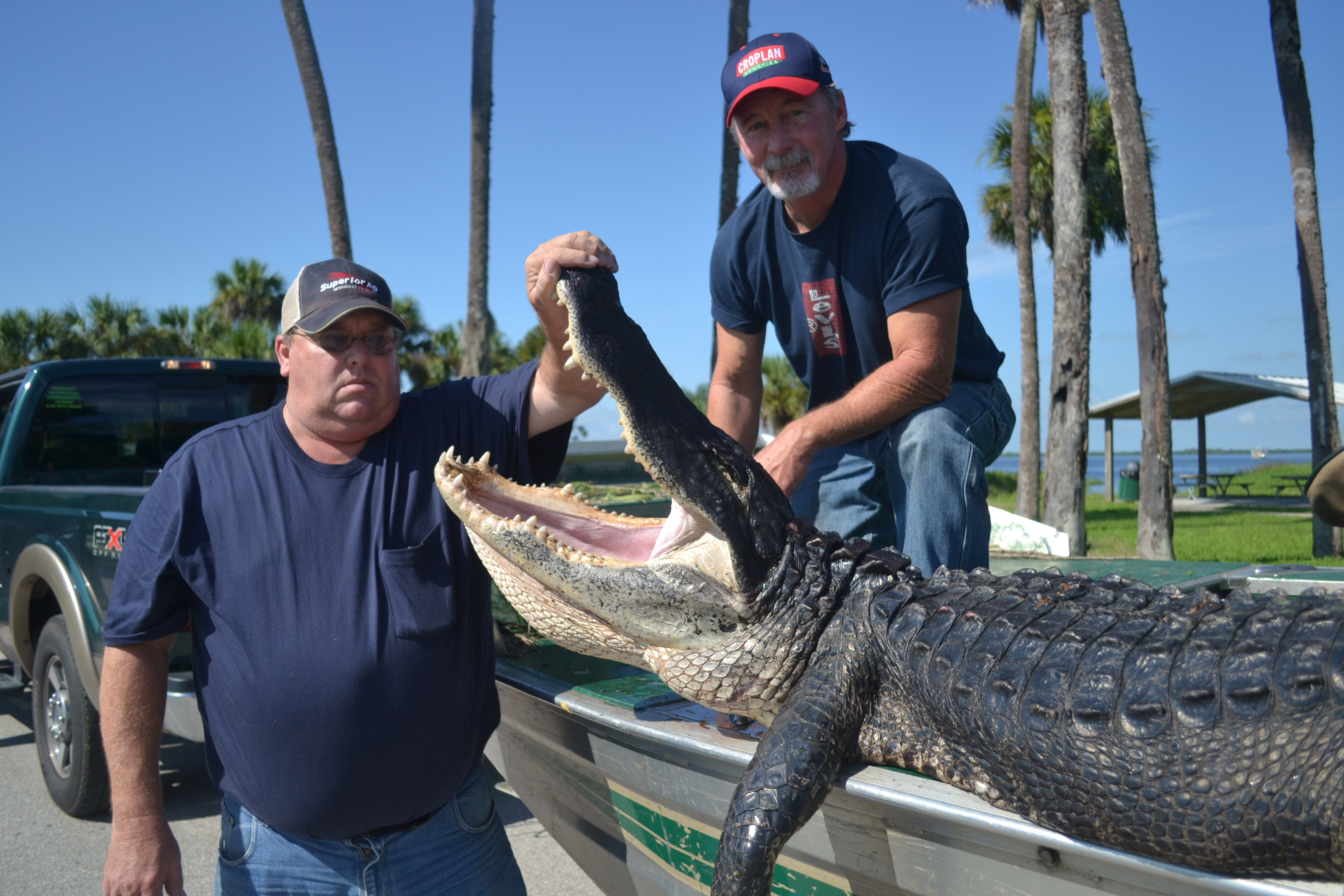 Airboat & Gator Charters: Trophy Gator Hunt - Private