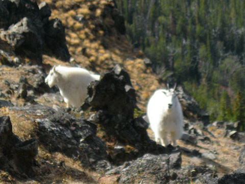 Black Otter Guide Service: Goat/Moose Hunts