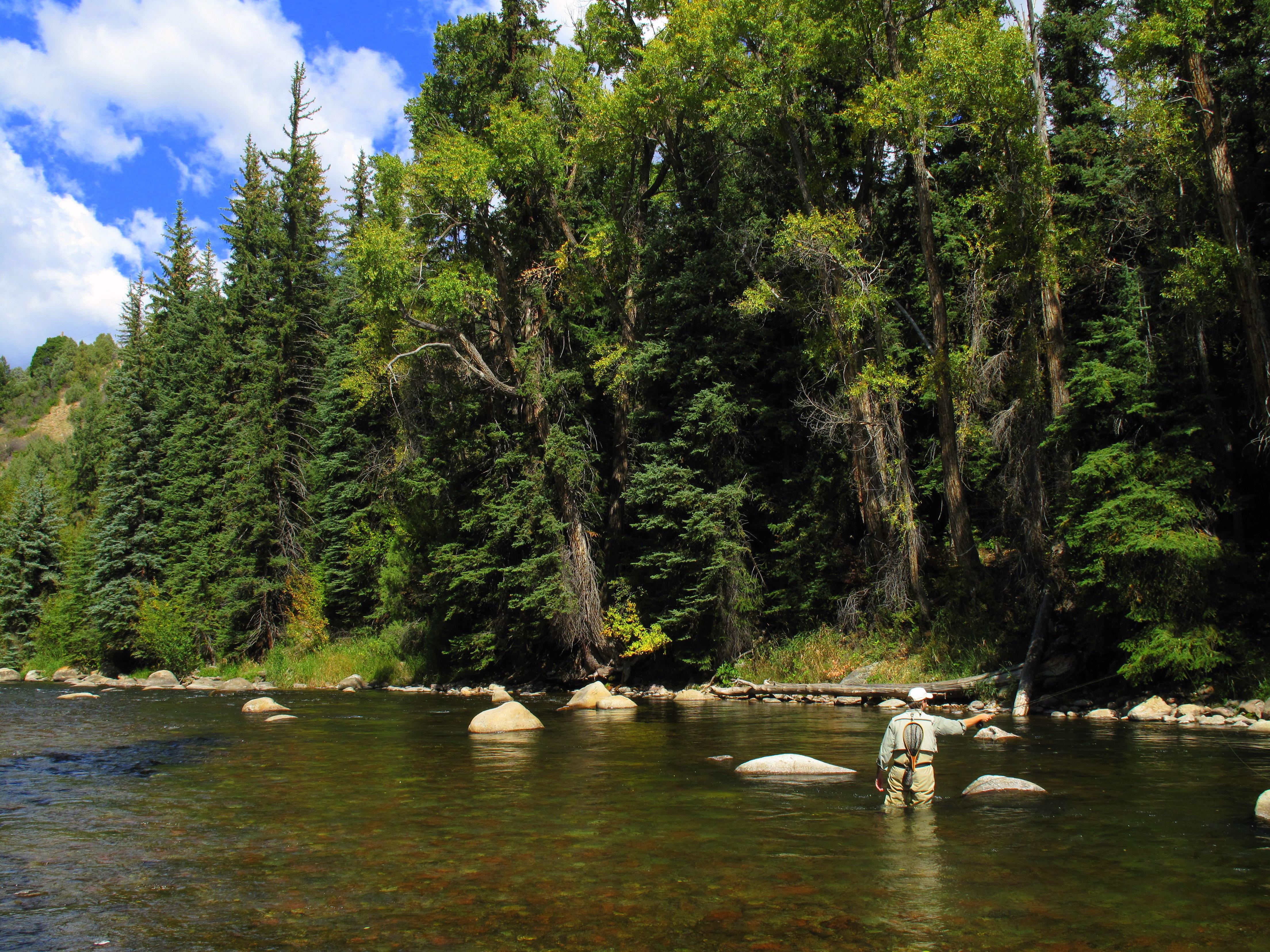 Aspen Flyfishing: Wade Trip