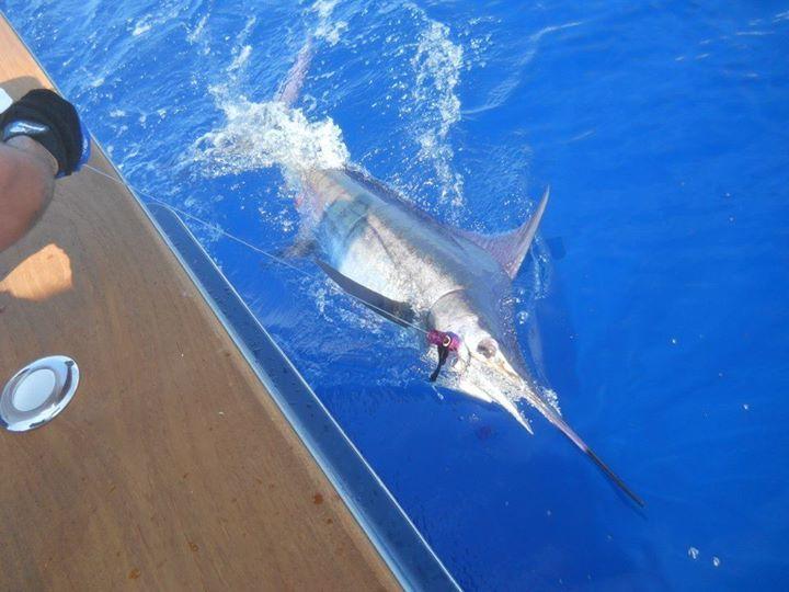 No Quarter Sportfishing: Ocean City,  MD Shark