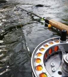 The Douglaston Salmon Run: Fall 2 Full Day F-Sunday