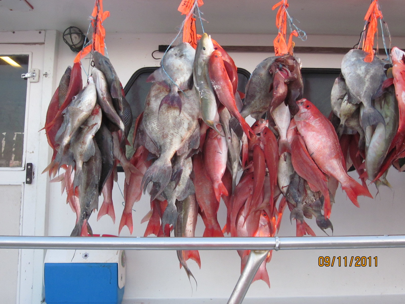 Capt Stacy Fishing Charters: Full Day Fishing