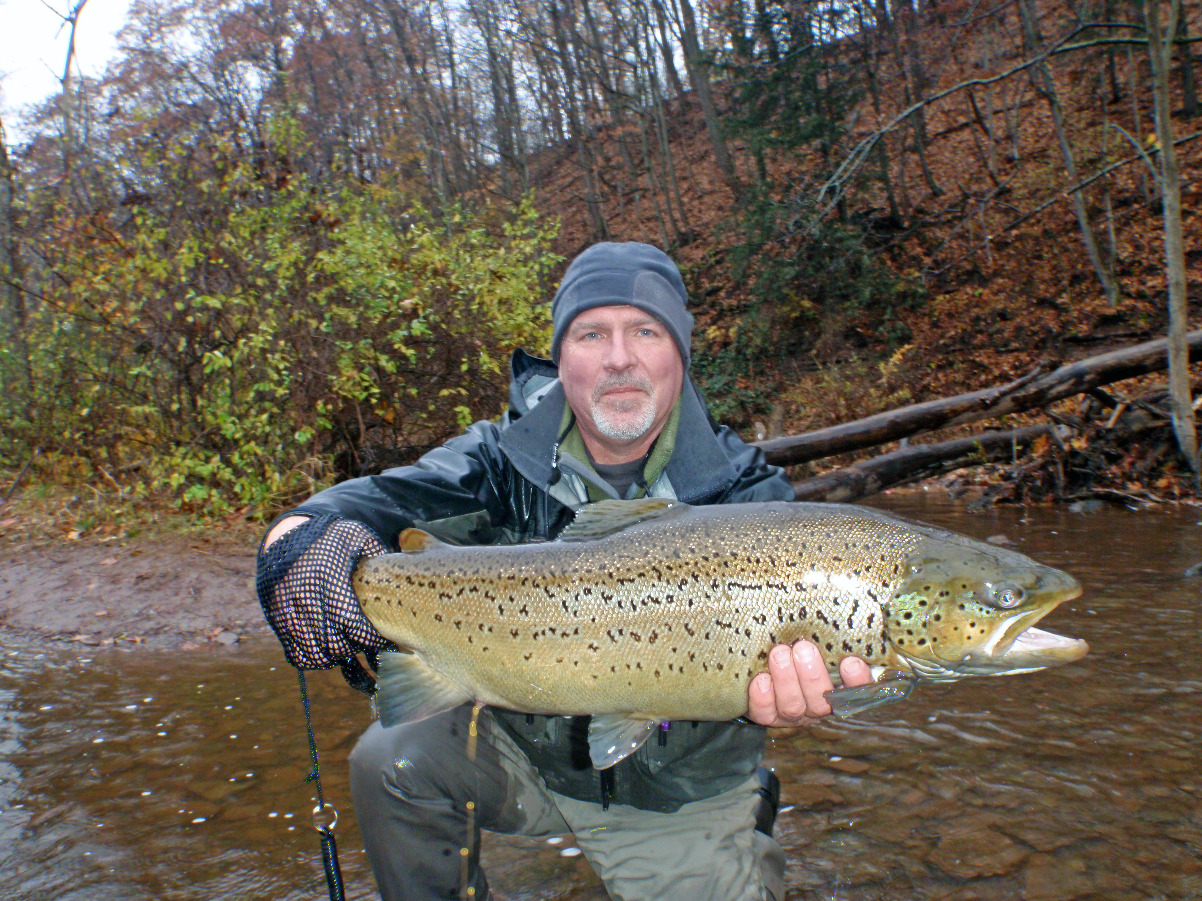 Oak Orchard River Guide Service: Brown Trout Fishing - Full Day