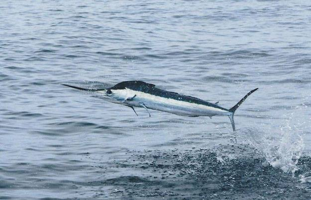 Rhonda's Osprey Charter Fishing: Ocean City,  MD Overnight