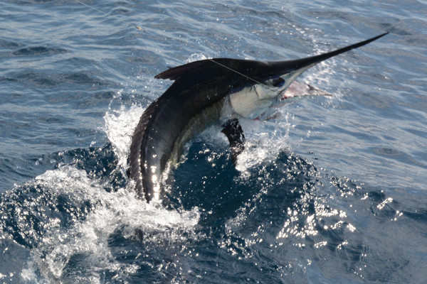 Obsession Sportfishing Charters: Full Day Trip