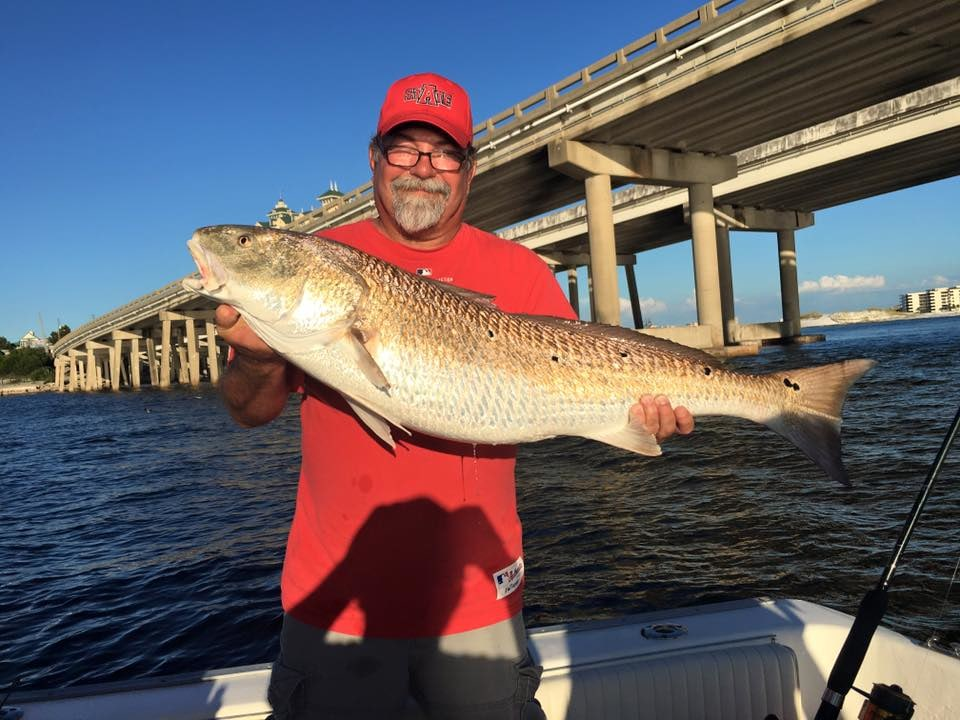 Gulf Angler Fishing Charters: Blacktip H Destin Afternoon Near Shore Charter