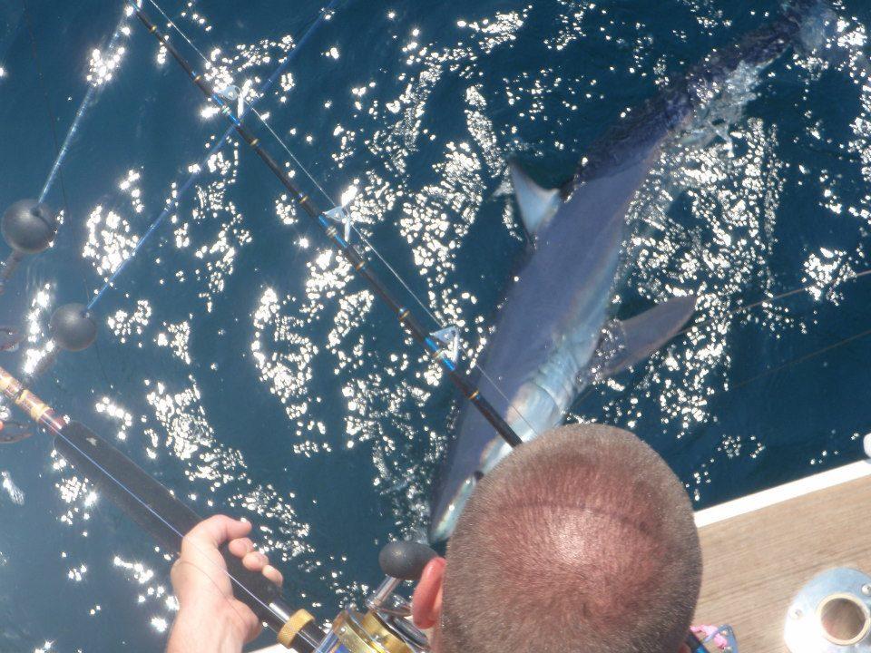 Island Girl Charters: Bluefish/Bonita/Shark Trip