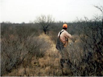 Sandy Oaks Ranch: WILD QUAIL HUNTS @ SANDY OAKS