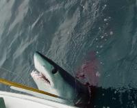 Last Call: Shark Fishing Trip