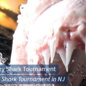 South Jersey Shark Tournament