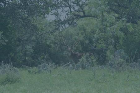Fish & Hunt Texas