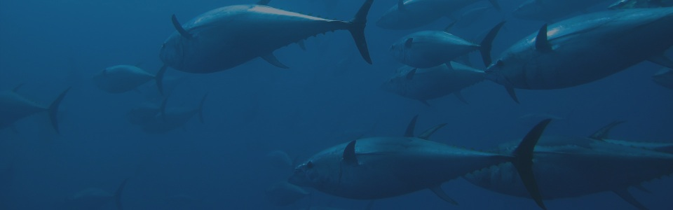 Big Tuna Fishing Adventure Giveaway