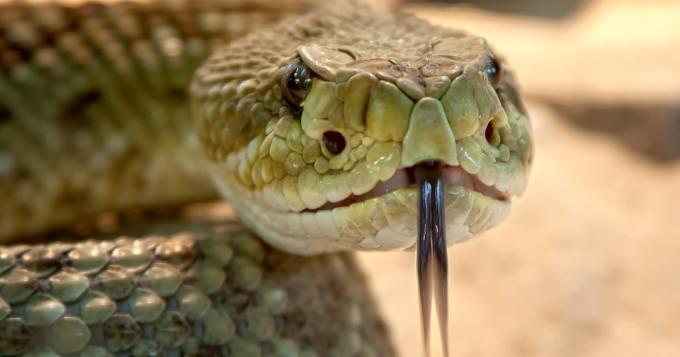 Mies yritti salakuljettaa käärmeen lentokoneeseen - housuissa havaittiin jotain ylimääräistä