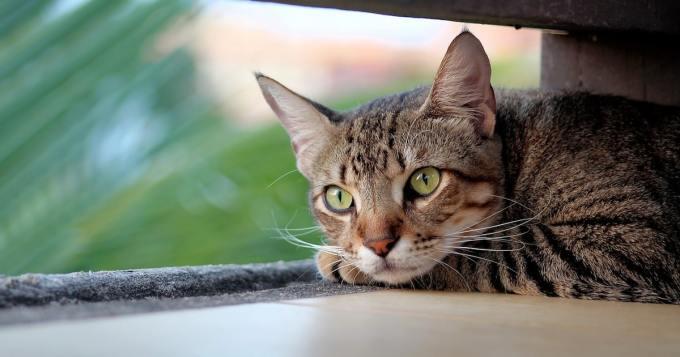 35 minuuttia selviytymistaistoa - kissa selvisi hengissä