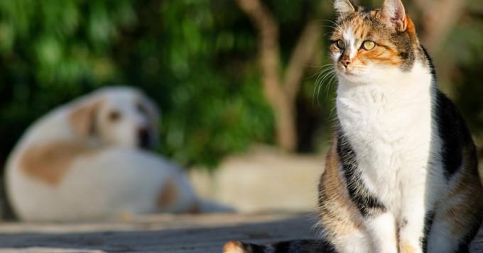 Mökkikausi ja helteet alkavat: huomioi nämä alkukesän vaarat lemmikin kanssa