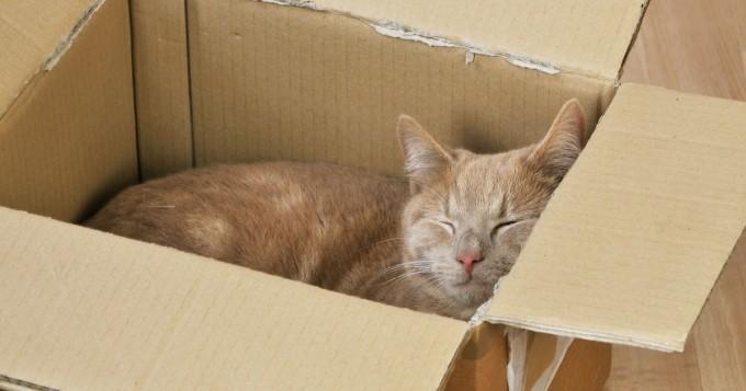 Kissa asteli vahingossa 1100 kilometrin reissun - näin höppänä järjesti sen