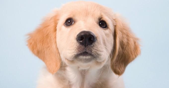 Koira voi tarvita aurinkovoidetta - Edgard & Cooper antaa kesävinkit