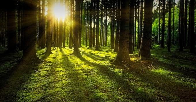 Ympäristöystävällinen kuntosali istuttaa puun joka kerta, kun jäsen ilmoittautuu ryhmäliikuntatunnille