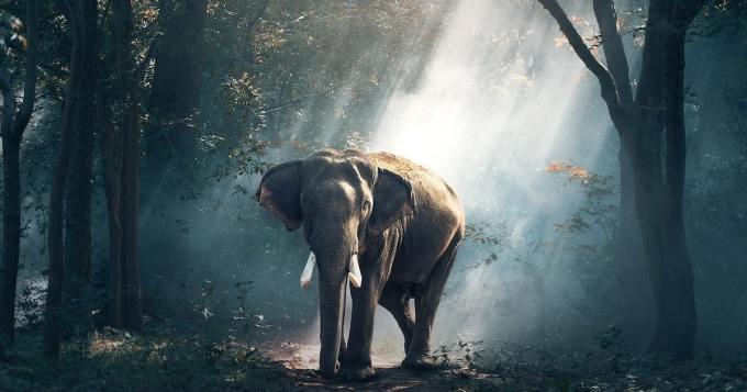 350 kuollutta norsua - voiko tästä tuntemattomasta olla vaaraa myös ihmisille?