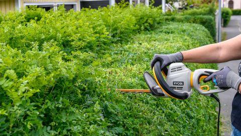 Har du koll på växtligheten vid din gata?