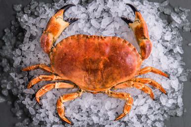 https://res.cloudinary.com/fish-for-thought/image/upload/f_auto/crab_whole_1524216165