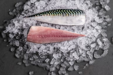 mackerel-fillet