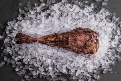 Sustainable Monkfish