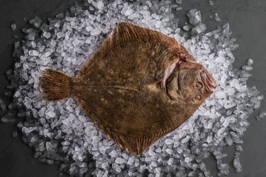 Sustainable Turbot