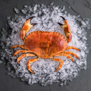 Whole Cornish Brown Crab
