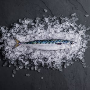 Mackerel (Whole Fish)