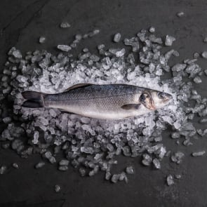 Farmed Seabass Whole