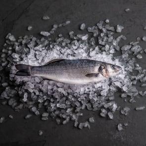 Farmed Seabass, Scaled & Gutted (Frozen)