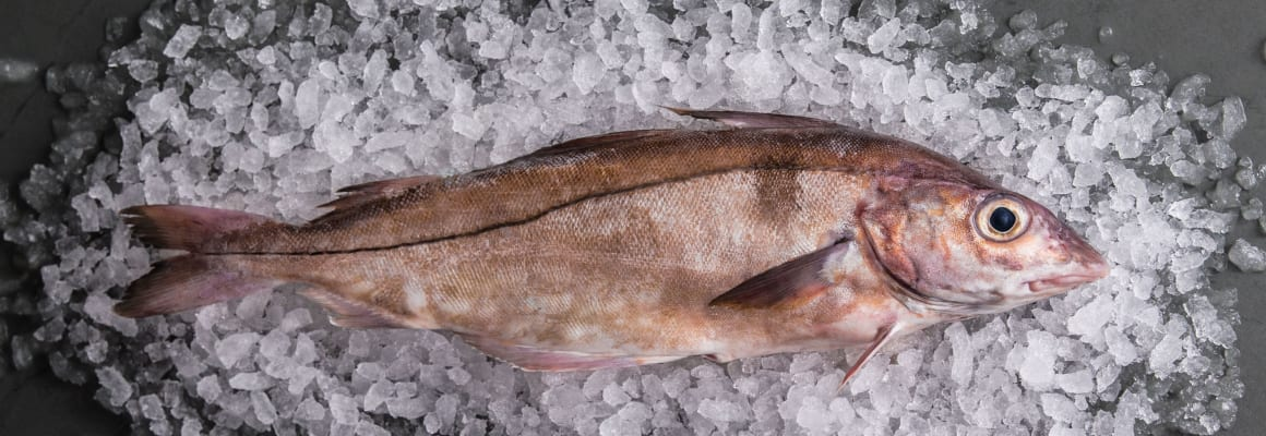 Haddock-Whole-Fish