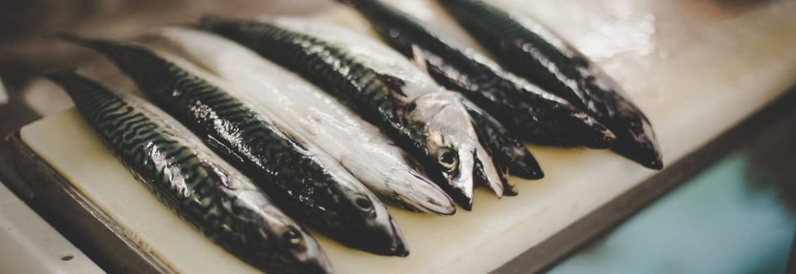 mackerel-fresh-fish