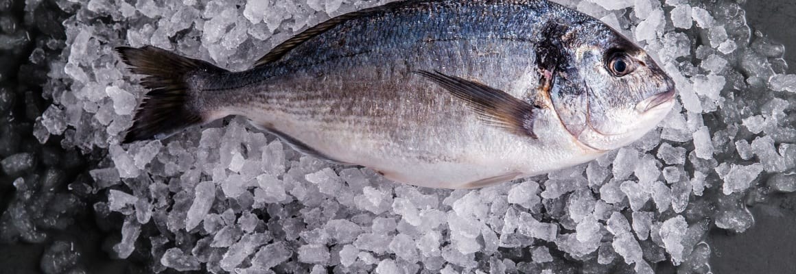 Seabream-whole-fish
