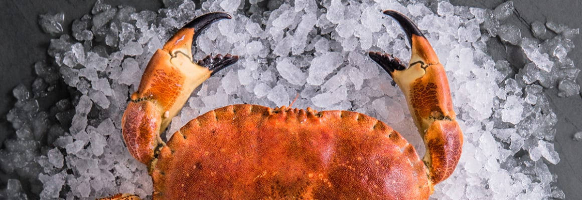 Sustainable Cornish Crabs