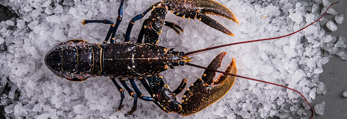 Sustainable Lobster