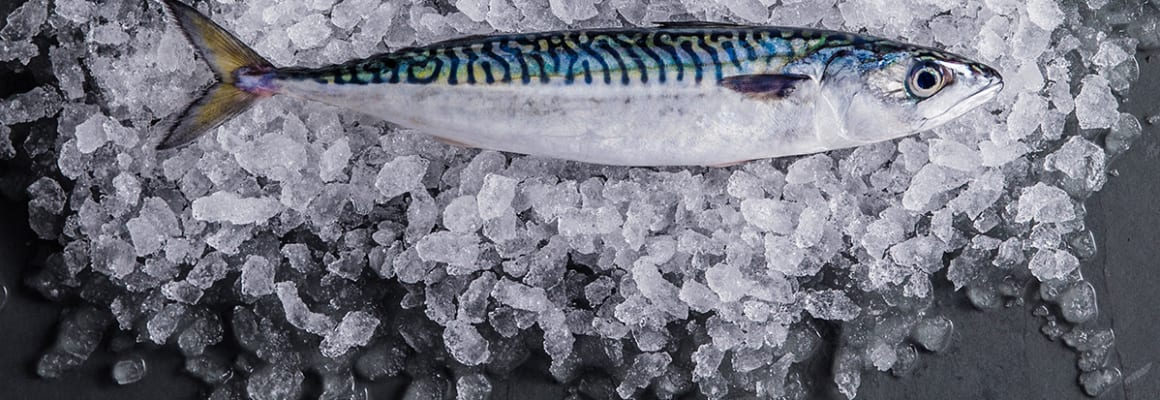 Sustainable Mackerel