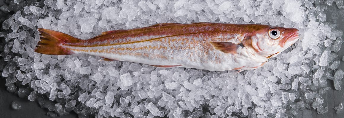 Sustainable Whiting