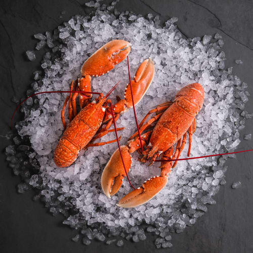 Cornish Lobsters for 2