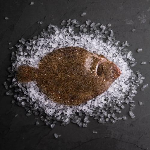 Brill (Whole Fish)